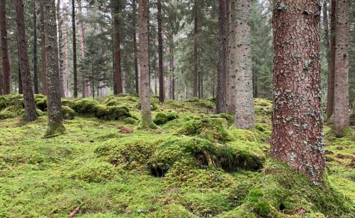 Skogen - Ytterpaneler, konstruktionsvirke, råspontsluckor och takstolar.